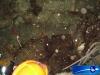 100630_ponthaux_fermentation_020