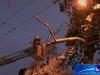 arbre11122008-5