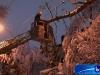 arbre11122008-6