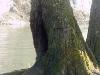 arbresarine-mvc-004